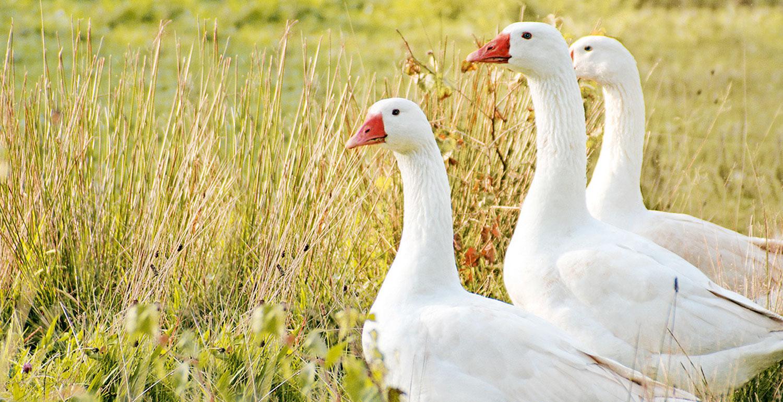 Traumina Tier- und Naturzschutz
